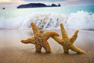 Sea Stars Dance Wallpaper for Android, iPhone and iPad