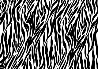Zebra Print Picture for Android, iPhone and iPad