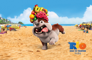 Luiz Bulldog in Rio Background for Android, iPhone and iPad
