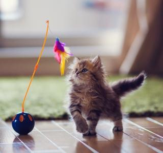 Kitten And Feather - Obrázkek zdarma pro 1024x1024