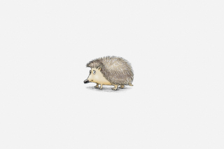Hedgehog Illustration sfondi gratuiti per cellulari Android, iPhone, iPad e desktop