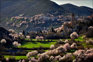Italy In Bloom Background for Android, iPhone and iPad