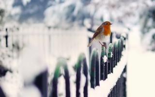 Картинка Winter Bird для андроид