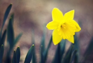 Yellow Flower Background for Android, iPhone and iPad