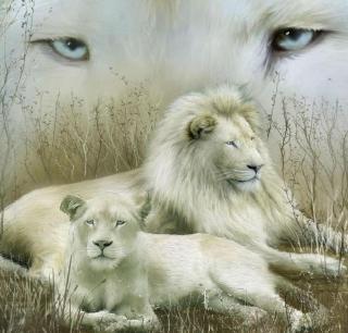 White Lions - Obrázkek zdarma pro iPad Air