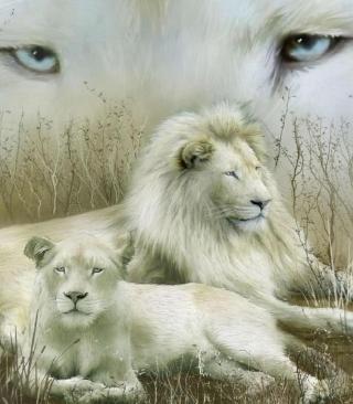 White Lions - Obrázkek zdarma pro 240x432