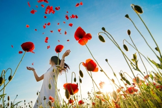 Girl In Poppy Field Background for Android, iPhone and iPad