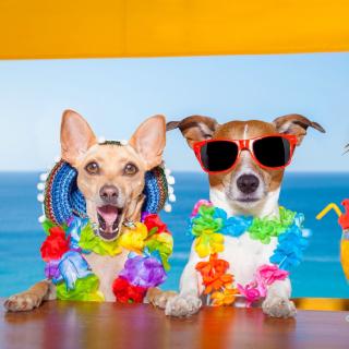 Dogs in tropical Apparel - Obrázkek zdarma pro iPad