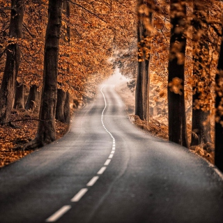 Road in Autumn Forest - Obrázkek zdarma pro 2048x2048