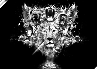 King Of Animals Background for Android, iPhone and iPad