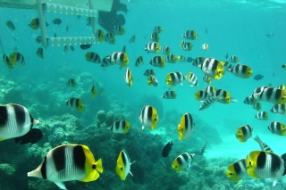 Ocean Fish Wallpaper for Android, iPhone and iPad