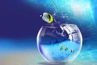 Yellow Fish sfondi gratuiti per cellulari Android, iPhone, iPad e desktop