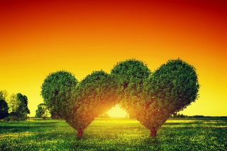 Heart Green Tree Background for Android, iPhone and iPad