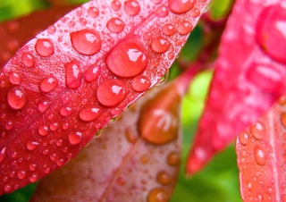 Water Drops On Leaves Wallpaper for Android, iPhone and iPad