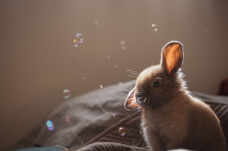 Funny Little Bunny Background for Android, iPhone and iPad