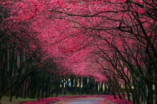 Free Alley With Blooming Flowers Picture for Android, iPhone and iPad