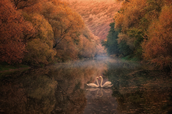 Swans on Autumn Lake wallpaper