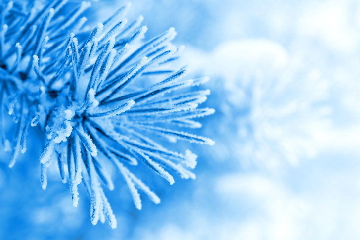 Macro Tree Freezing wallpaper