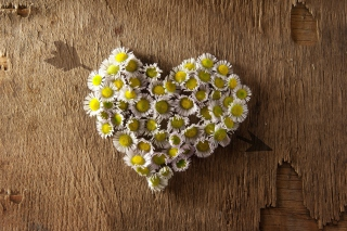 Free Daisy Heart Picture for Android, iPhone and iPad