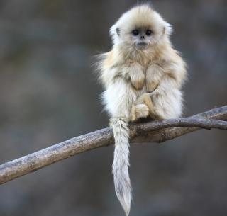 Cute Little Monkey Is Cold - Obrázkek zdarma pro 208x208