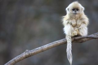 Cute Little Monkey Is Cold - Obrázkek zdarma pro Samsung Galaxy Q