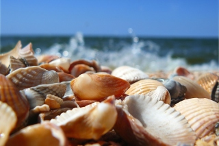 Seashells On Beach Background for Android, iPhone and iPad