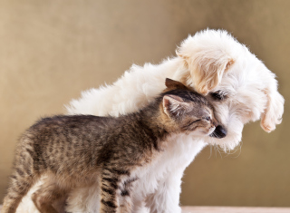 Dog Cat Love Picture for Android, iPhone and iPad