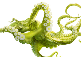 Green Octopus - Obrázkek zdarma pro 1440x900