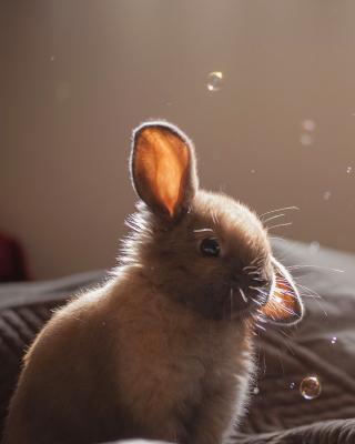 Grey cutest bunny - Obrázkek zdarma pro Nokia C3-01