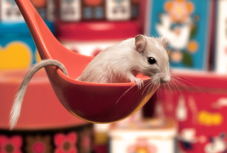 Cute Rat Picture for Android, iPhone and iPad