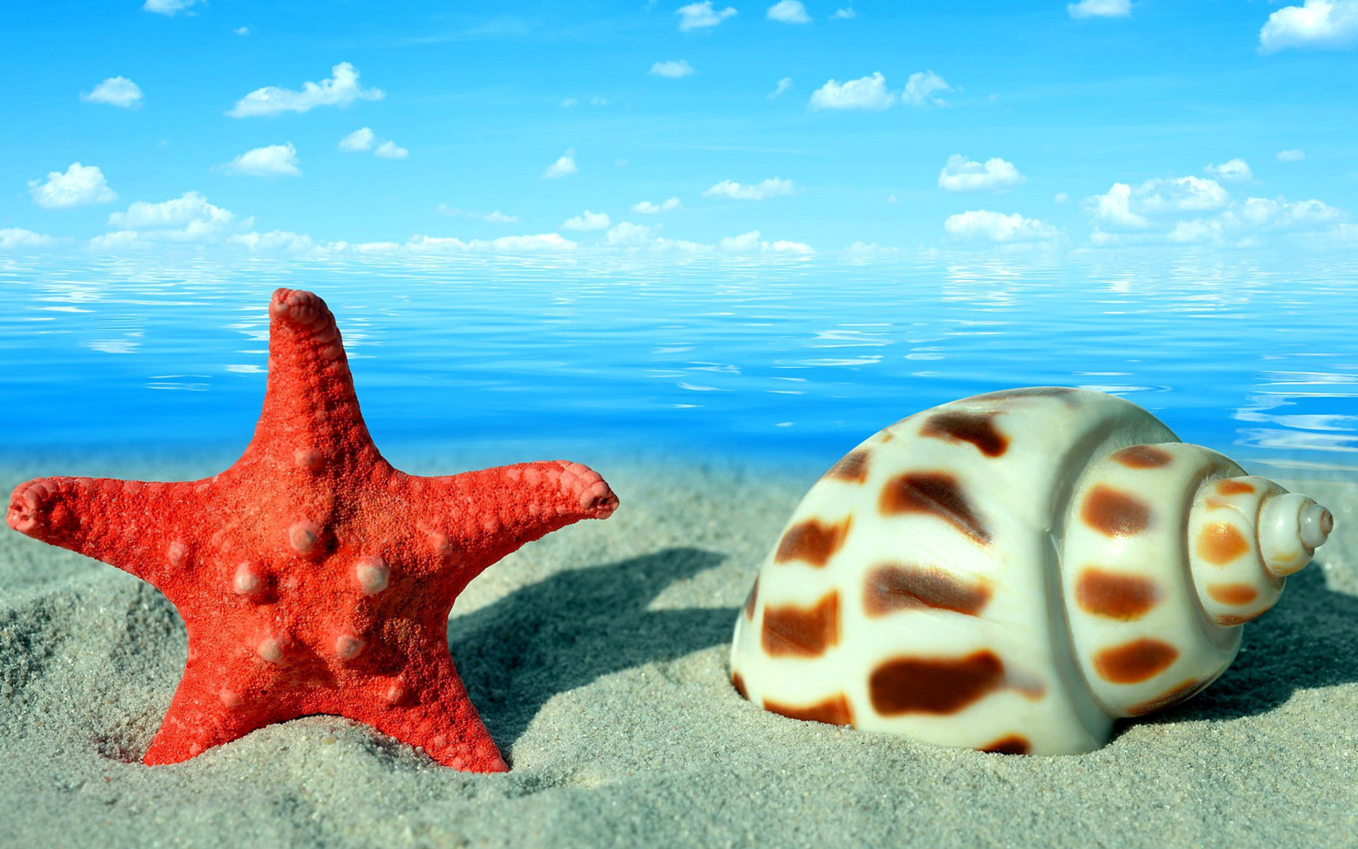 Seashell and starfish sfondi gratuiti per widescreen for Sfondi full hd pc