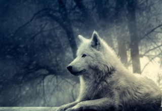 Night Wolf Wallpaper for Android, iPhone and iPad