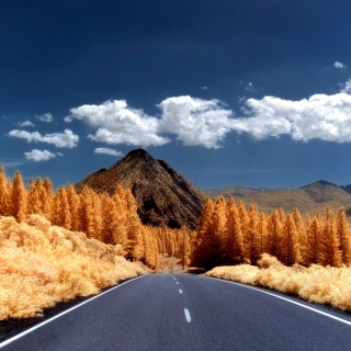 Autumn Road - Obrázkek zdarma pro 128x128