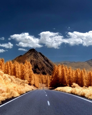 Autumn Road - Obrázkek zdarma pro Nokia 206 Asha