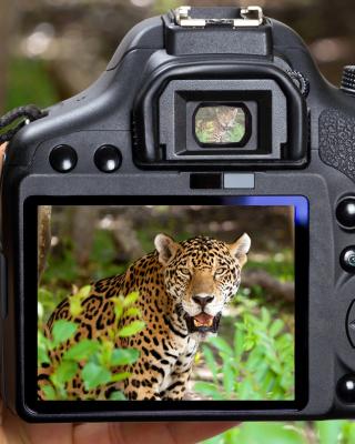 Jungle Spotting - Obrázkek zdarma pro Nokia X6