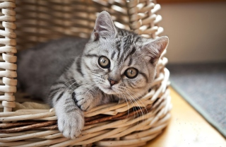 Cat in Basket Background for Android, iPhone and iPad