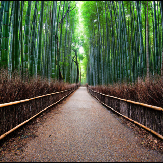 Bamboo Forest Arashiyama in Kyoto - Obrázkek zdarma pro iPad 2