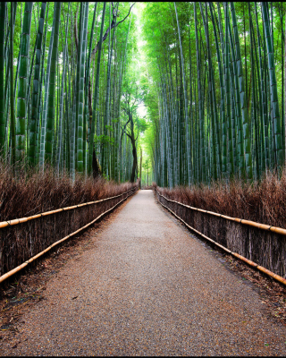 Bamboo Forest Arashiyama in Kyoto - Obrázkek zdarma pro Nokia Asha 310