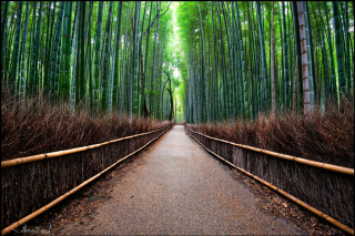 Bamboo Forest Arashiyama in Kyoto Picture for Android, iPhone and iPad