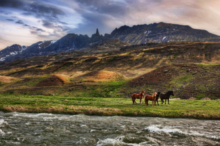 Landscape In Iceland And Horses Background for Android, iPhone and iPad