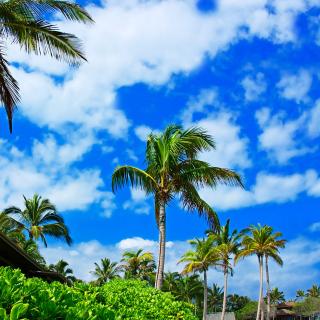 Kenya Diani Beach - Obrázkek zdarma pro iPad mini 2