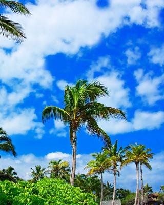 Kenya Diani Beach - Obrázkek zdarma pro iPhone 4