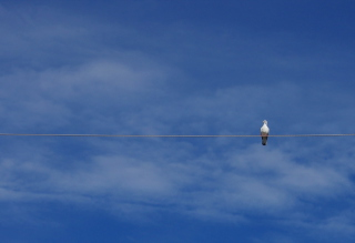 Free Bird On Wire Picture for Android, iPhone and iPad