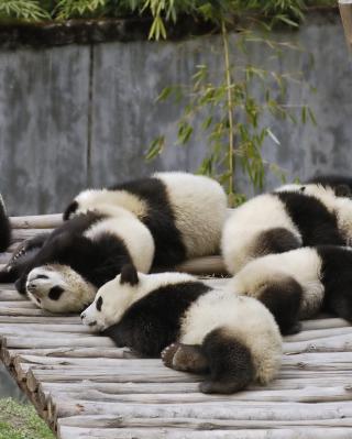 Funny Pandas Relaxing - Obrázkek zdarma pro Nokia Lumia 810