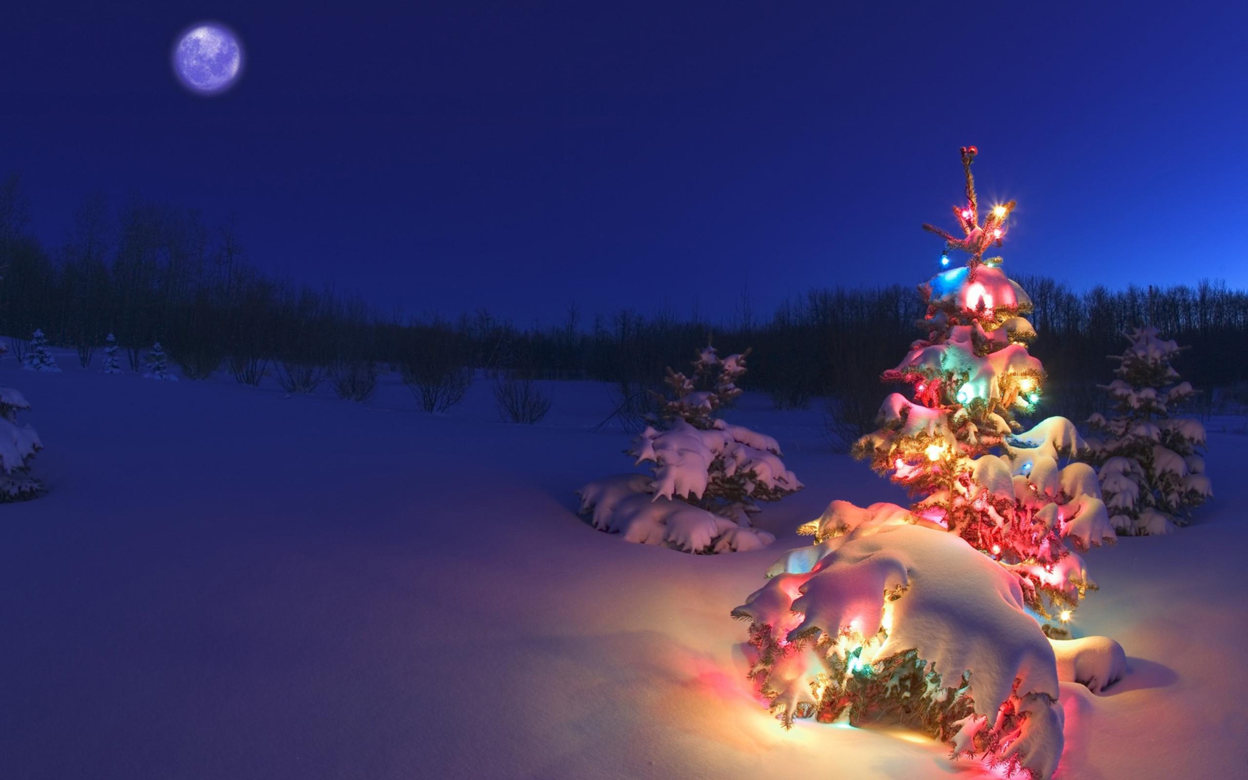 Три новогодние ели  № 1417122 без смс