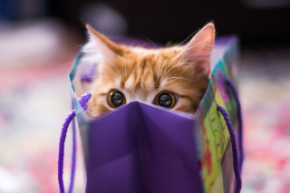 Free Ginger Cat Hiding In Gift Bag Picture for Android, iPhone and iPad
