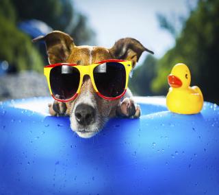 Relax Dog - Obrázkek zdarma pro iPad mini