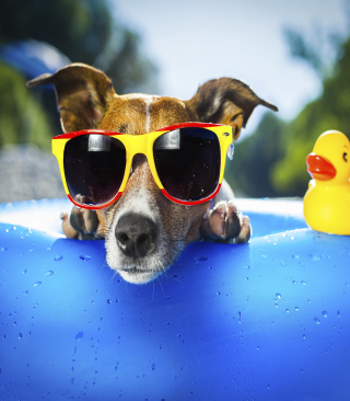 Relax Dog - Obrázkek zdarma pro Nokia 5233