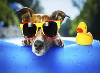 Relax Dog - Obrázkek zdarma pro 1024x600