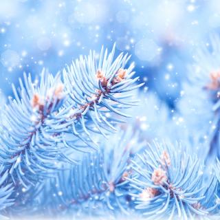Snow on cones - Obrázkek zdarma pro iPad
